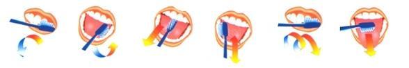 Фото: Методика чистки зубов