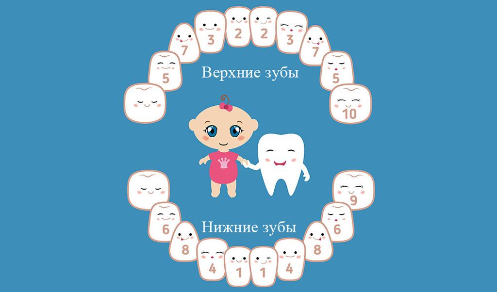 Схема прорезывания детских зубов
